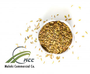 Fennel essential oil, maleki commercial co
