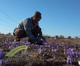 saffron, maleki commercial co