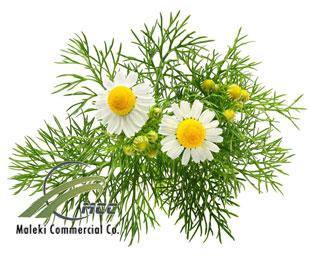 German chamomile, maleki commercial co