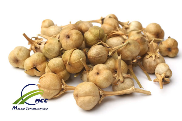 All Information about Peganum Harmala Seed (Syrian Rue), maleki commercial co