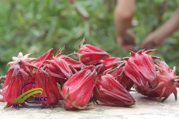 All information about Hibiscus (Mecca) Tea, maleki commercial co